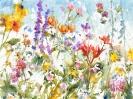 Minnesota Field of Wild Flowers